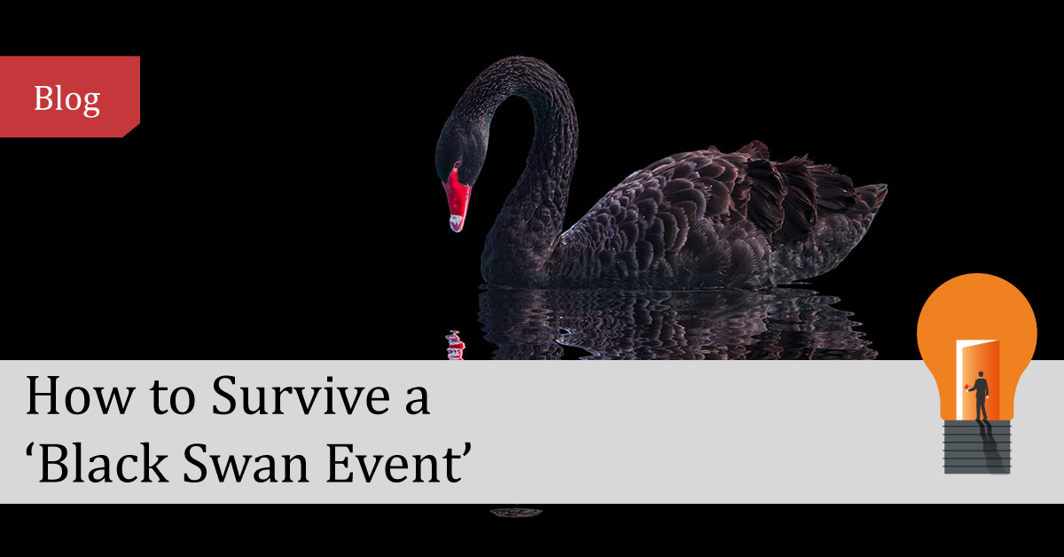 Image of a black swan